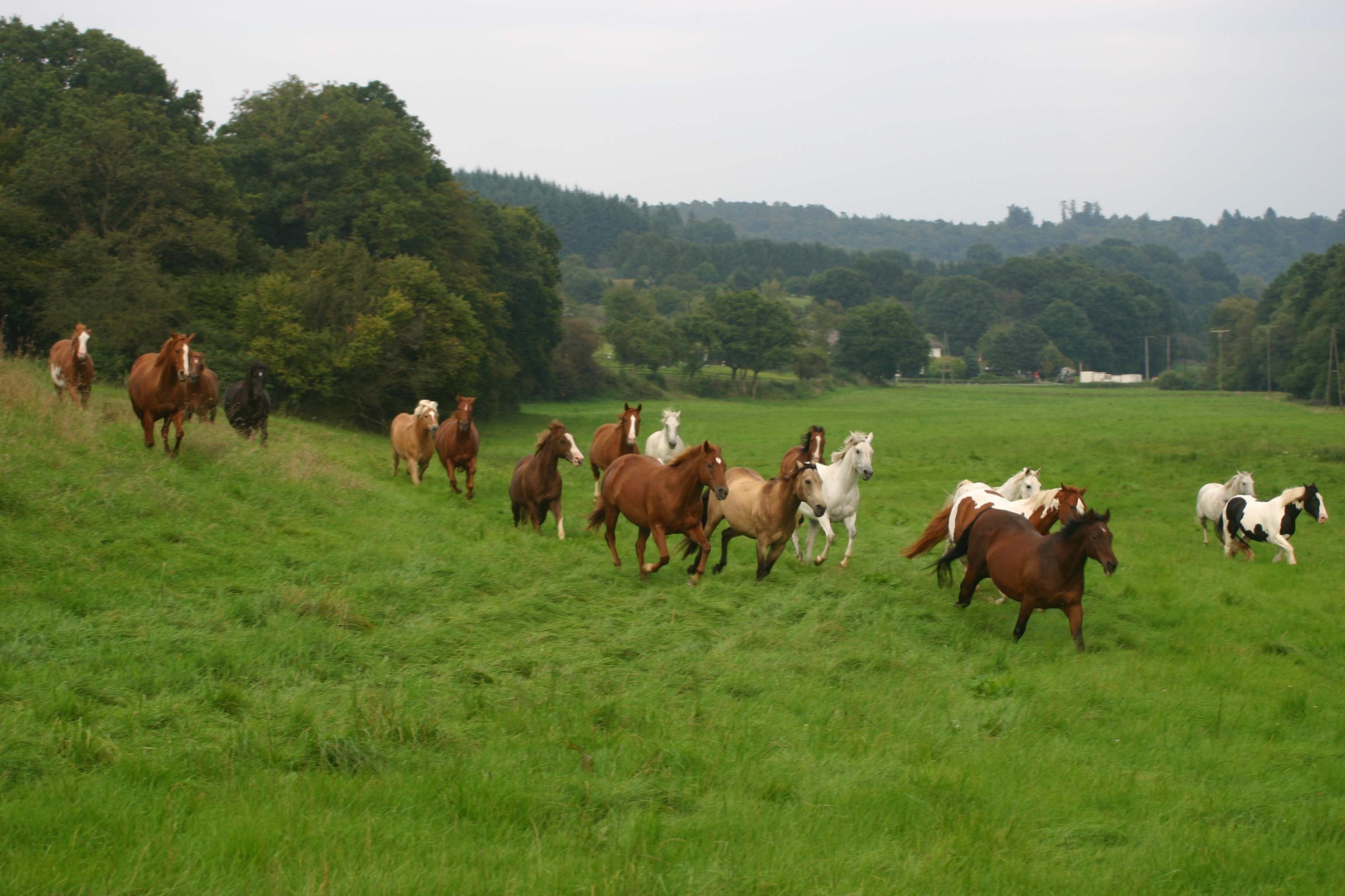 17 ha. Pferdekoppeln